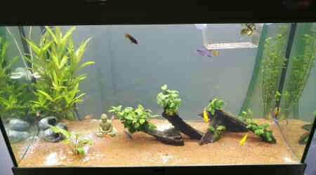 Quel poisson mettre dans un aquarium de 300 l?