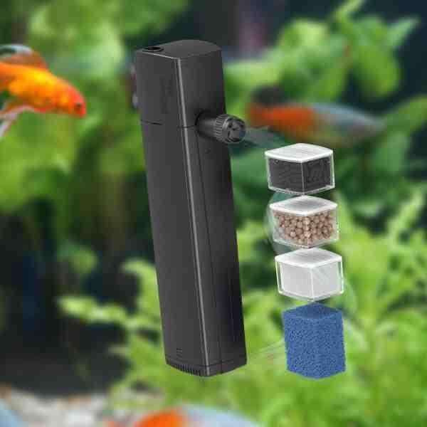 Quel poisson mettre dans un aquarium de 70 litres ?