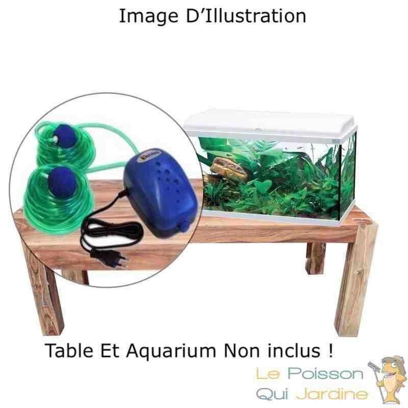 Quel poisson mettre dans un aquarium de 80 l?