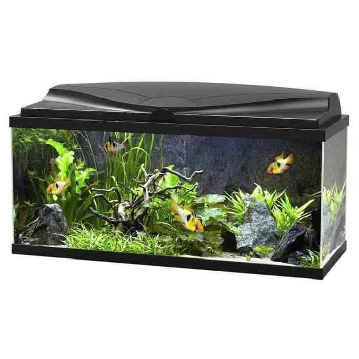 Quel poisson pour aquarium 35l?