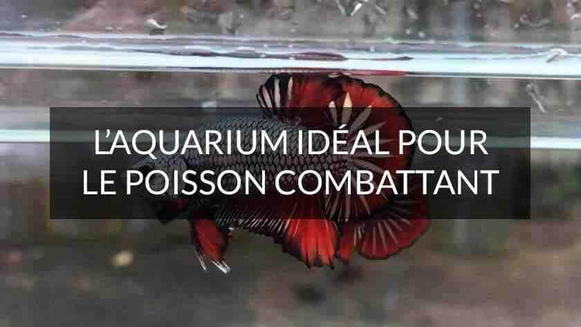 Quel poisson pour aquarium 4l?