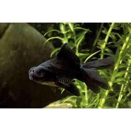 Quel poisson pour un aquarium ?