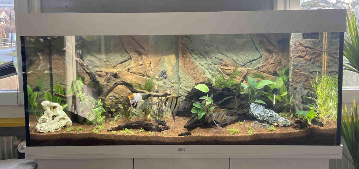 Quel poisson pour un aquarium de 120 litres?