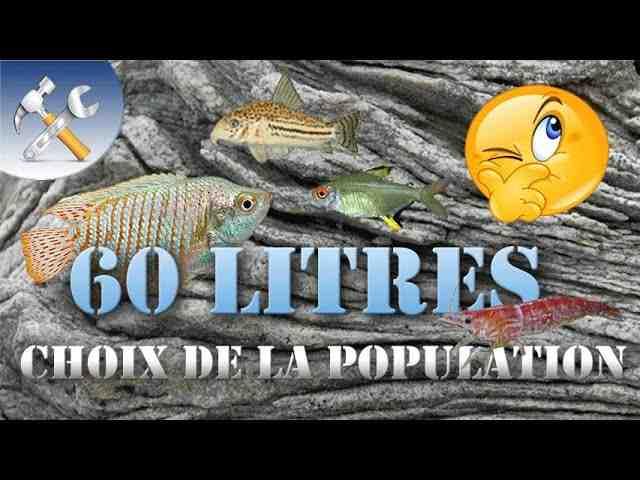 Quel poisson pour un aquarium de 35 l?