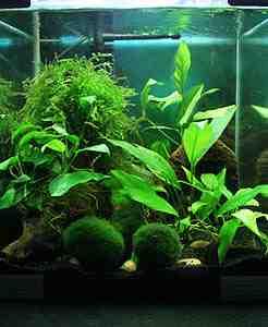 Quel poisson pour un aquarium de 50 litres?