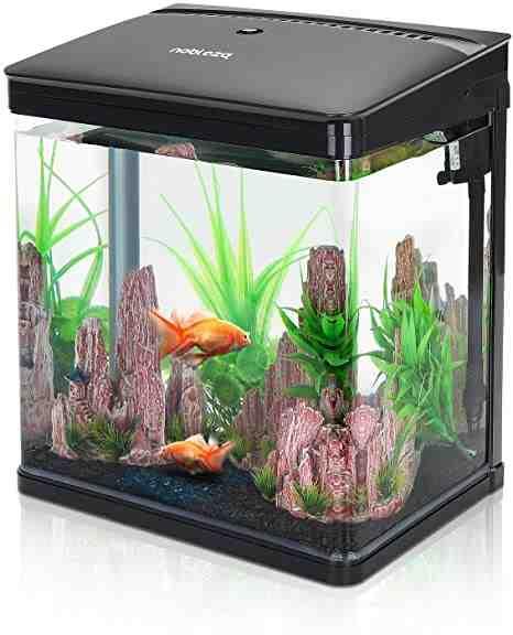 Quel poisson pour un aquarium de 80 litres?