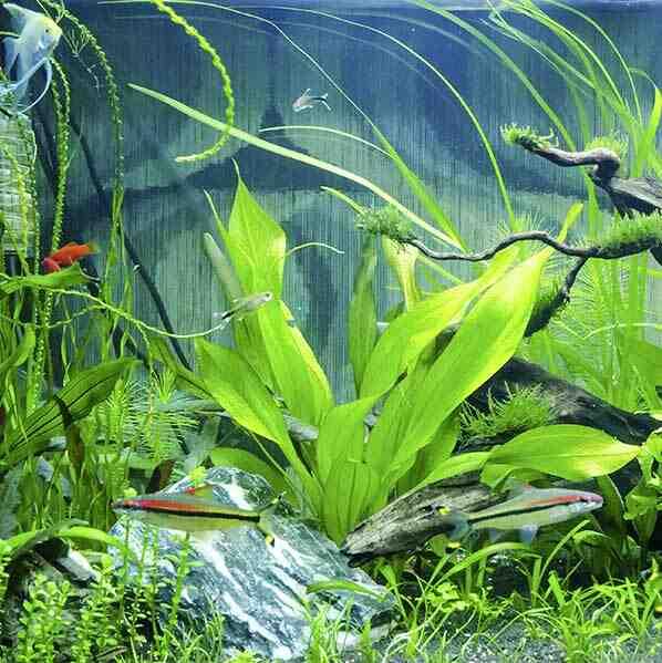 Quel produit pour commencer un aquarium ?