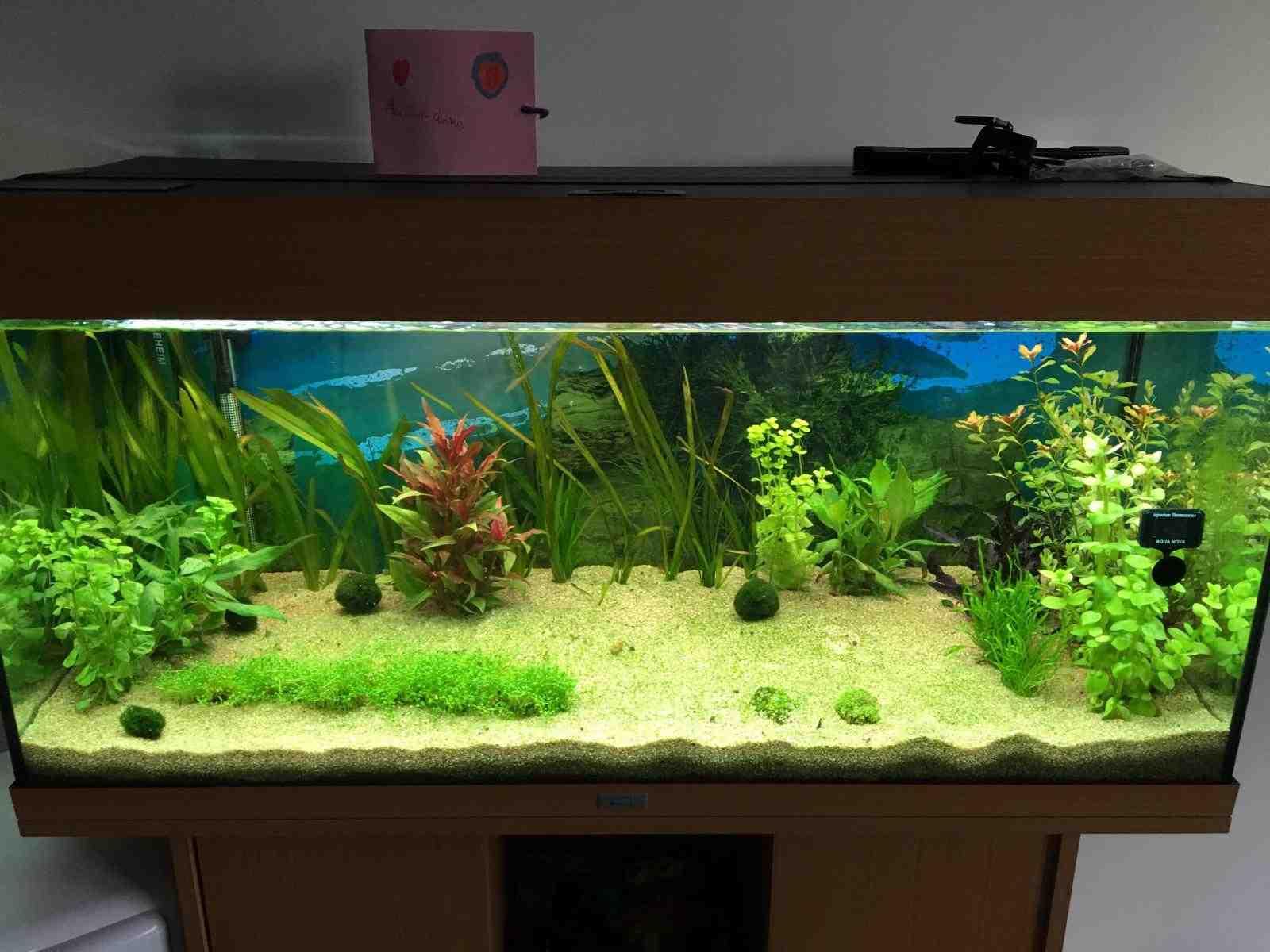 Quel type de sol pour la plante d'aquarium?