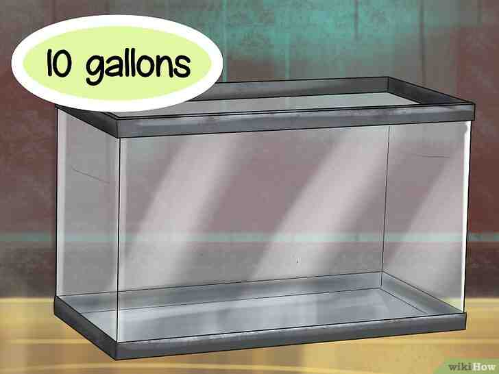 Quelle eau pour axolotl?