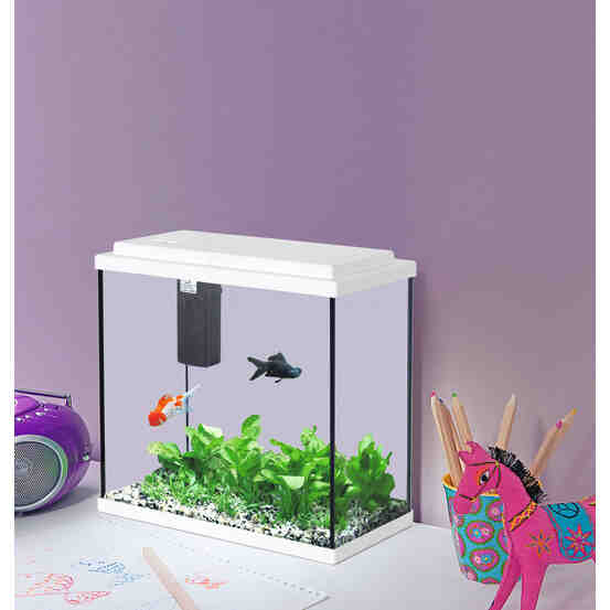 Quels poissons mettre dans un aquarium de 20 litres?