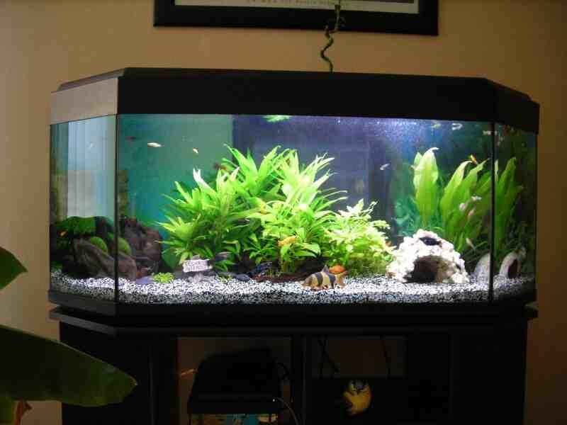 Quels poissons pour un aquarium de 240l ?