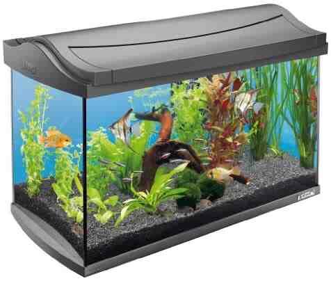 Quels produits pour démarrer un aquarium?