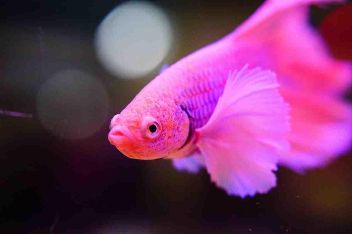 Quels sont les poissons les plus résistants dans une pêcherie?