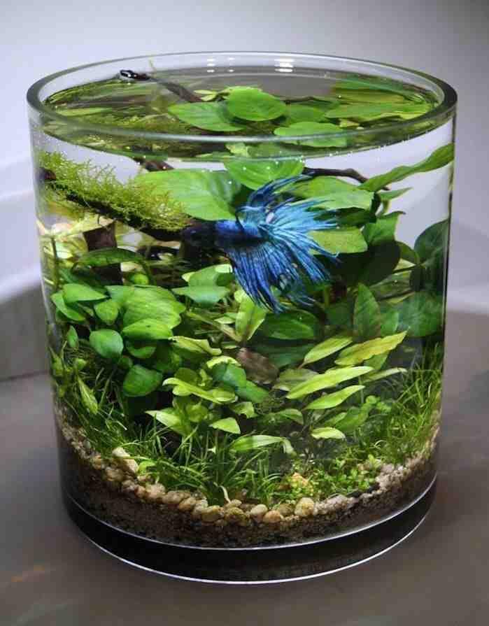 Comment ajouter des plantes à un aquarium?