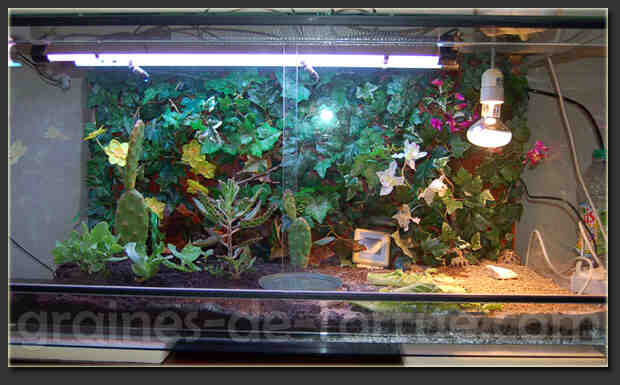 Comment amenager un Aquaterrarium ?