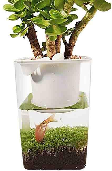 Comment avoir un aquarium bien planté?