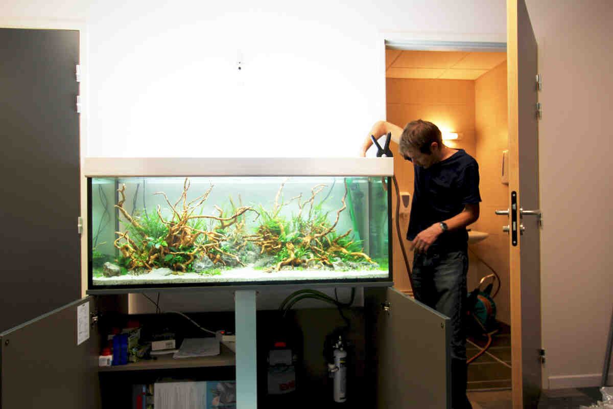 Comment avoir un bel aquarium?