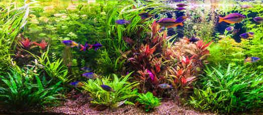 Comment choisir les bonnes plantes pour votre aquarium?