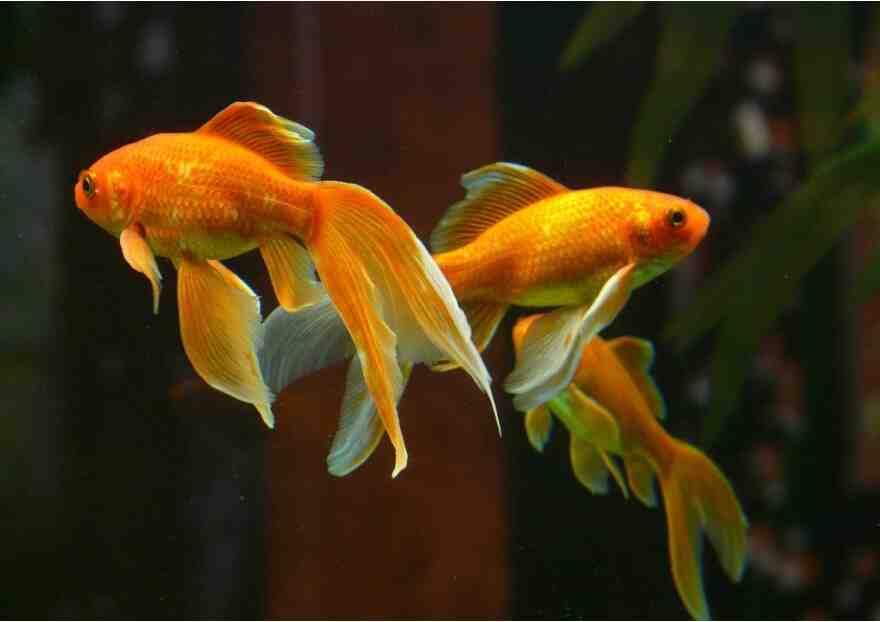 Comment choisissez-vous vos poissons d'aquarium?
