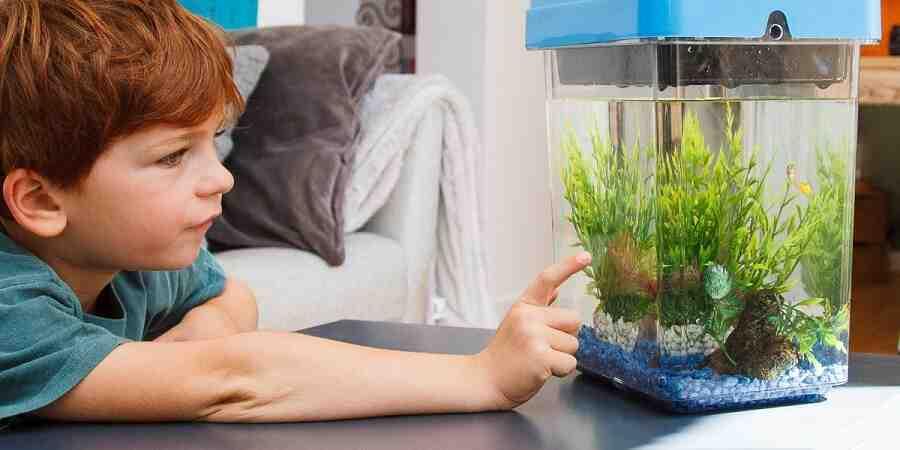 Comment débuter avec un aquarium?