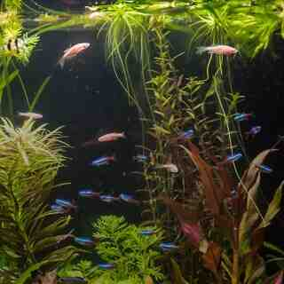 Comment démarrer un aquarium?