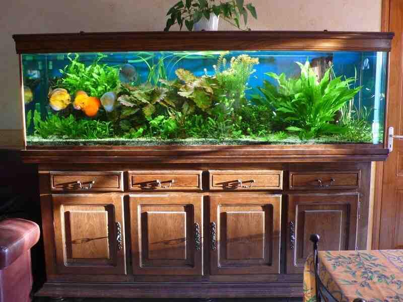 Comment faire de l'engrais pour les plantes d'aquarium?