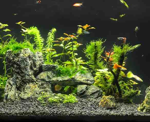 Comment faire de l'oxygène dans l'aquarium?