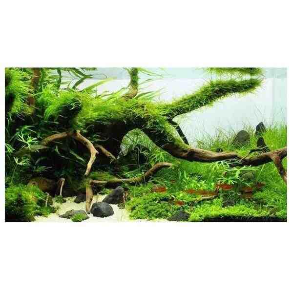 Comment faire germer des graines de plantes aquatiques?