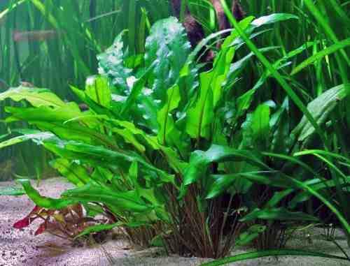 Comment faire pousser les plantes d'aquarium plus vite ?