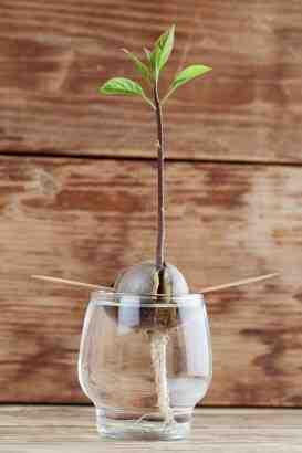Comment faire pousser une plante?