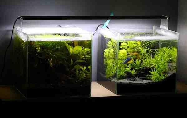 Comment faire tenir des plantes dans un aquarium ?