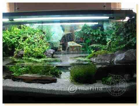 Comment faire un aqua terrarium?