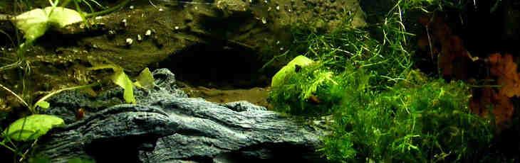 Comment faire un aquarium avec des plantes ?