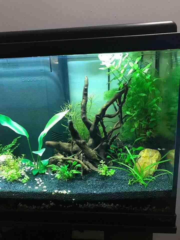 Comment faire un bon sol d'aquarium?