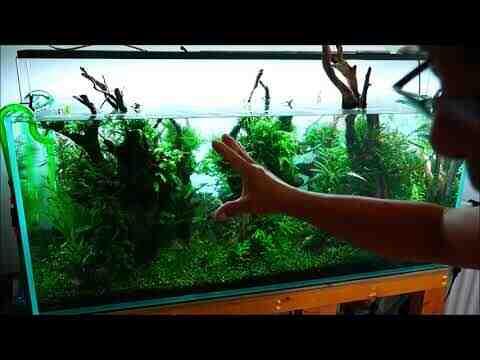 Comment gardez-vous l'aquarium prêt?