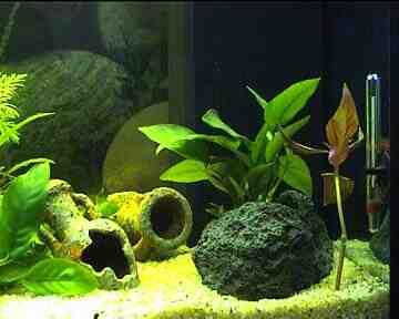 Comment installez-vous votre premier aquarium?