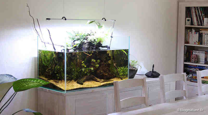 Comment laisser une racine dans un aquarium?
