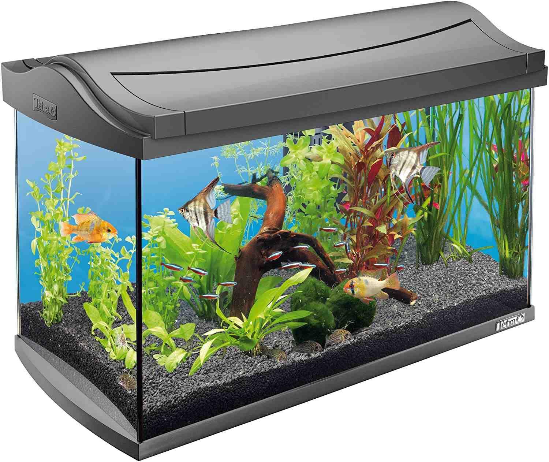 Comment l'aquarium est-il géré correctement?