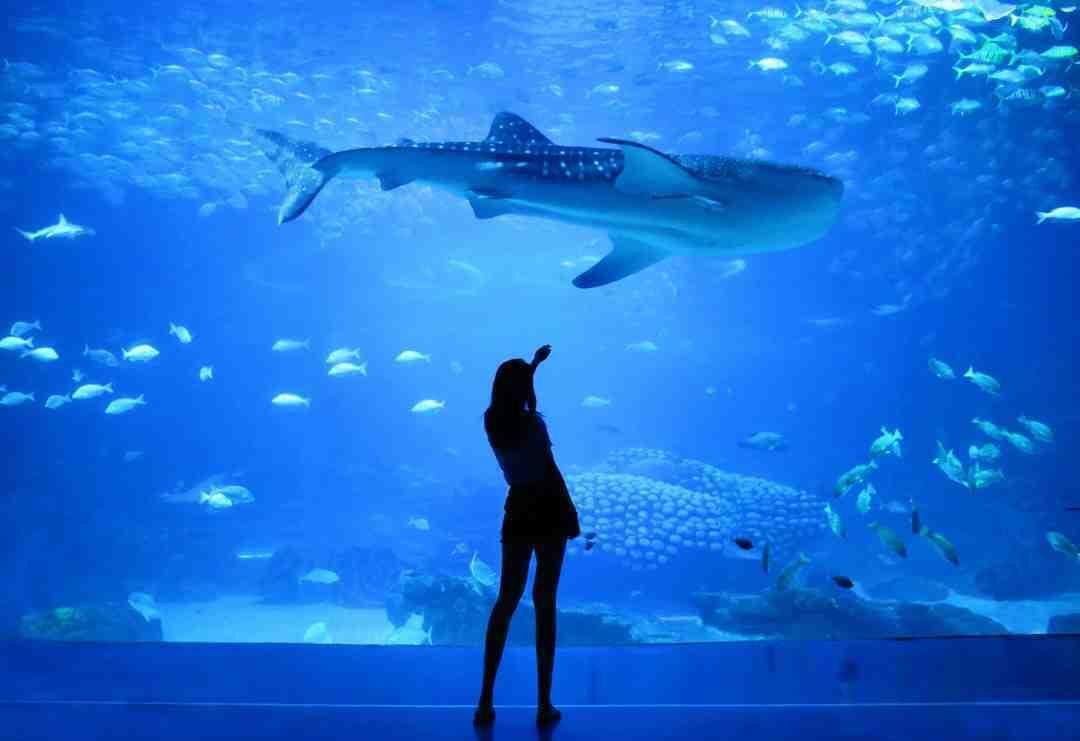 Comment obtenir de l'eau propre dans l'aquarium?