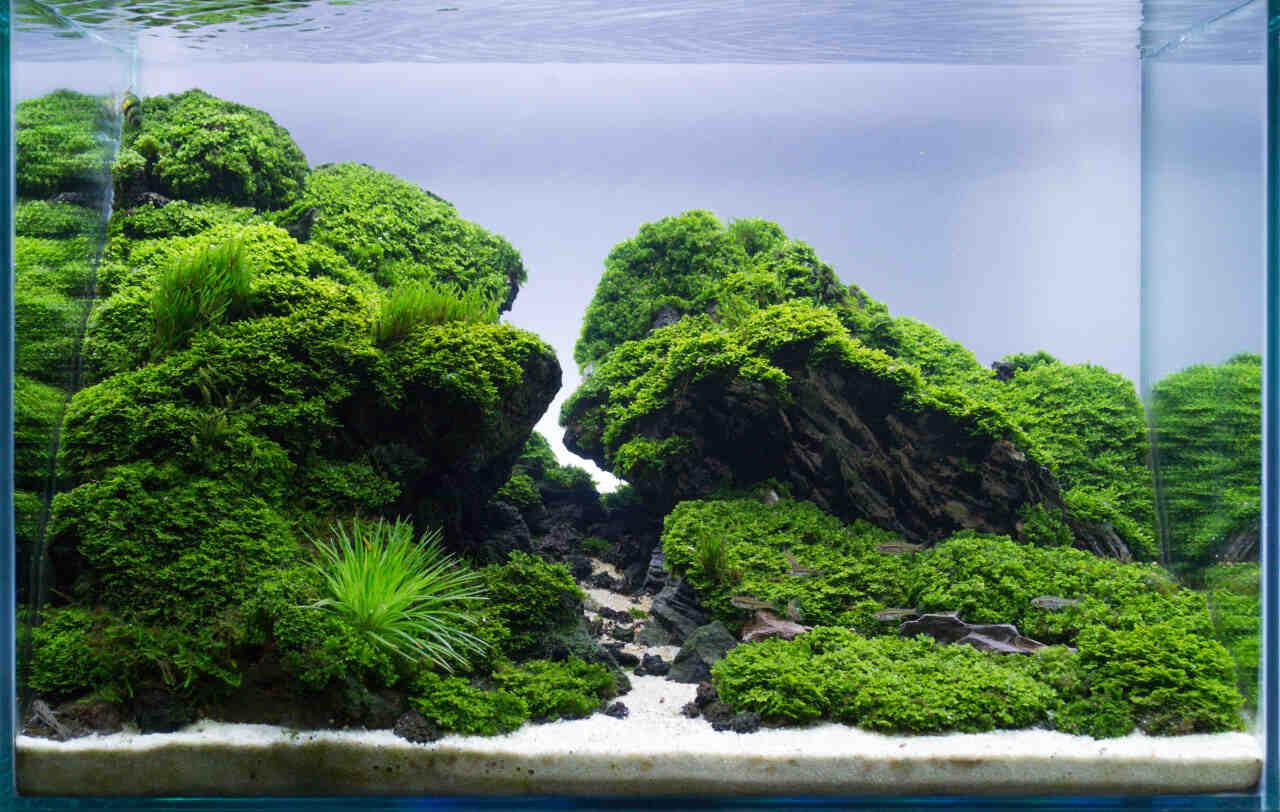 Comment planter un aquarium d'eau douce?