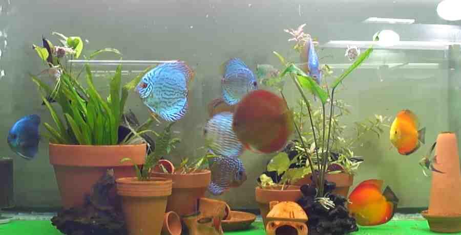 Comment prendre soin des plantes d'aquarium?