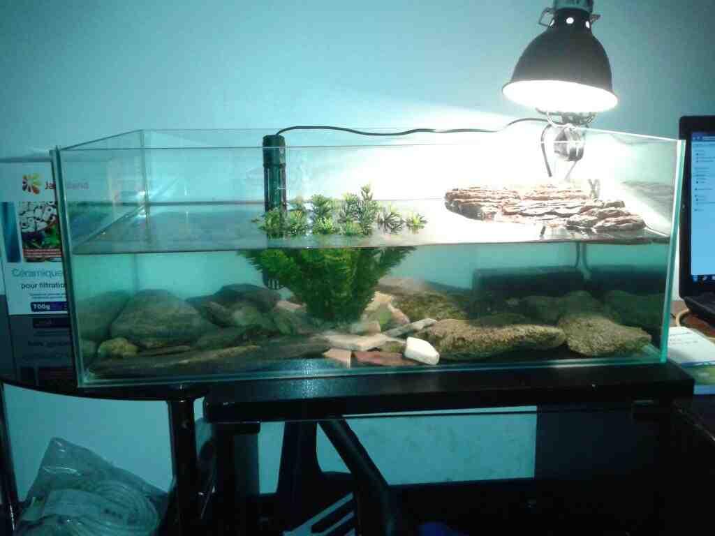 Comment puis-je garder l'eau de ma tortue propre?