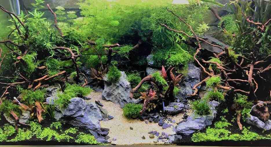 Comment remplir l'aquarium d'eau?