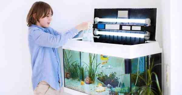 Comment savoir si un aquarium est oxygéné?
