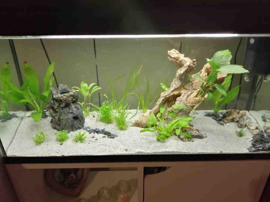 Pourquoi attendre 3 semaines pour aquarium ?