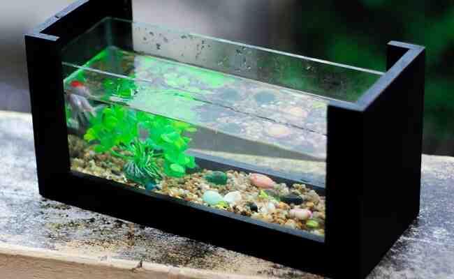 Pourquoi mettre des bactéries dans un aquarium?