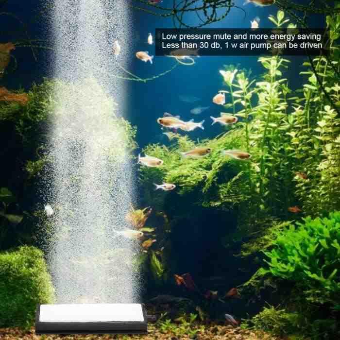 Pourquoi protéger votre aquarium avec de l'oxygène?