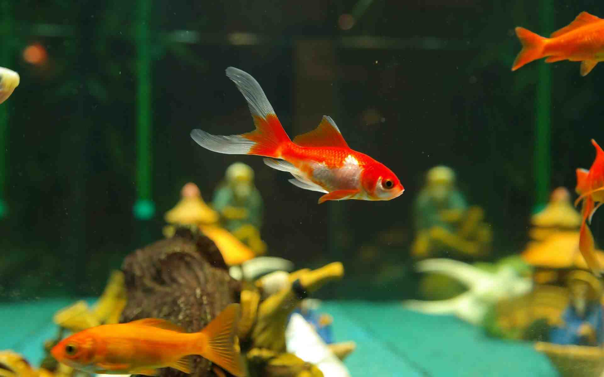 Pourquoi tous mes poissons sont-ils morts soudainement?