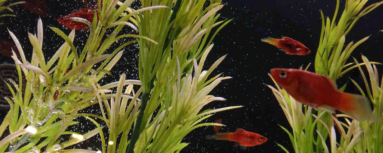 Pourquoi tout est-il brun dans l'aquarium?