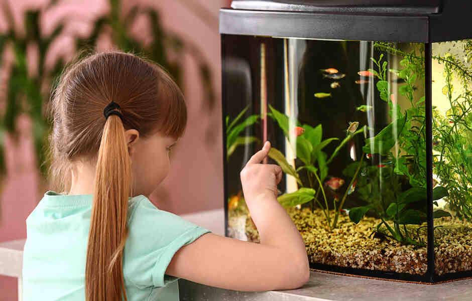 Quand les bactéries doivent-elles être placées dans un aquarium?